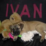 Foto's Ivan maand 2 tot en met 6